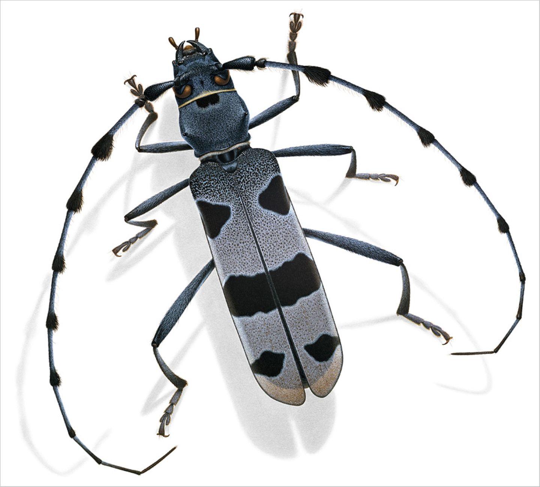 Fotogalerie: Kleine Käfer - ganz groß - Bild 2
