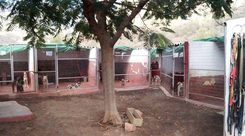 Tierschutz: Neues Leben für Streunerhunde