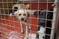 Tierschutz: Neues Leben für Streunerhunde - Bild 2