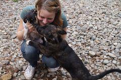 Tierschutz: Neues Leben für Streunerhunde - Bild 3
