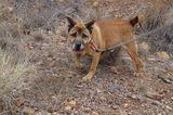 Tierschutz: Neues Leben für Streunerhunde - Bild 4