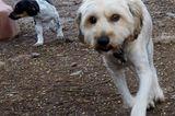 Tierschutz: Neues Leben für Streunerhunde - Bild 6