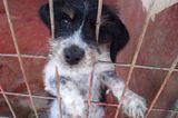 Tierschutz: Neues Leben für Streunerhunde - Bild 7