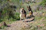 Tierschutz: Neues Leben für Streunerhunde - Bild 8