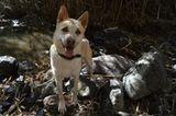 Tierschutz: Neues Leben für Streunerhunde - Bild 9