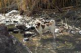 Tierschutz: Neues Leben für Streunerhunde - Bild 10