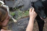 Tierschutz: Neues Leben für Streunerhunde - Bild 11