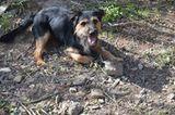 Tierschutz: Neues Leben für Streunerhunde - Bild 13