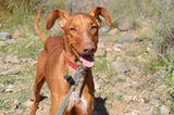 Tierschutz: Neues Leben für Streunerhunde - Bild 14