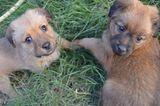 Tierschutz: Neues Leben für Streunerhunde - Bild 16