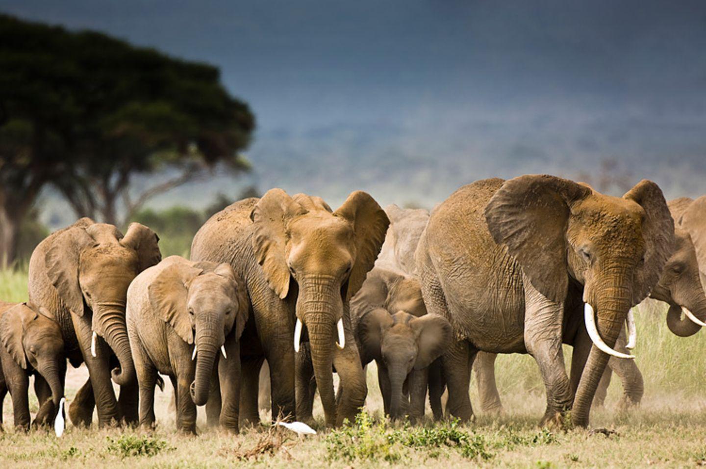 Elefanten: Geschichte einer gewichtigen Familie
