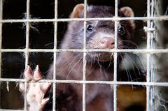 Tierschutz: Mode mit Haut und Haar