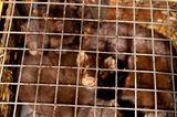 Tierschutz: Mode mit Haut und Haar - Bild 2