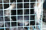 Tierschutz: Mode mit Haut und Haar - Bild 6