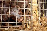 Tierschutz: Mode mit Haut und Haar - Bild 7