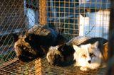 Tierschutz: Mode mit Haut und Haar - Bild 11
