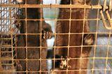Tierschutz: Mode mit Haut und Haar - Bild 12