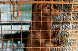 Tierschutz: Mode mit Haut und Haar - Bild 13