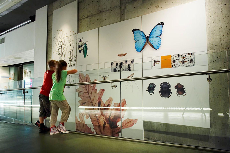 Im Darwin Centre die Evolution erleben