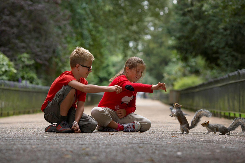 Im Park Eichhörnchen füttern