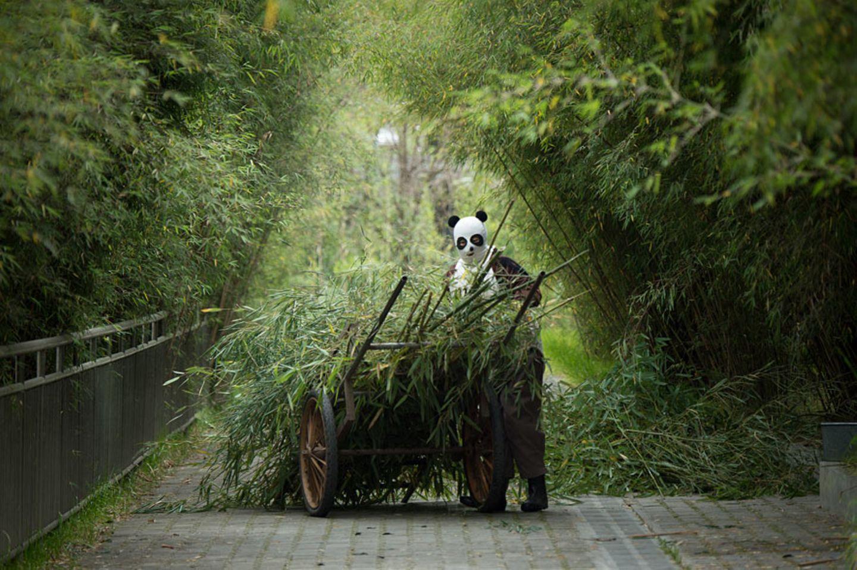 Vorliebe für Bambussprossen
