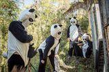 Tierschutz: Große Pandas: Der ungewöhnliche Weg zurück - Bild 3