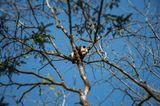 Tierschutz: Große Pandas: Der ungewöhnliche Weg zurück - Bild 10