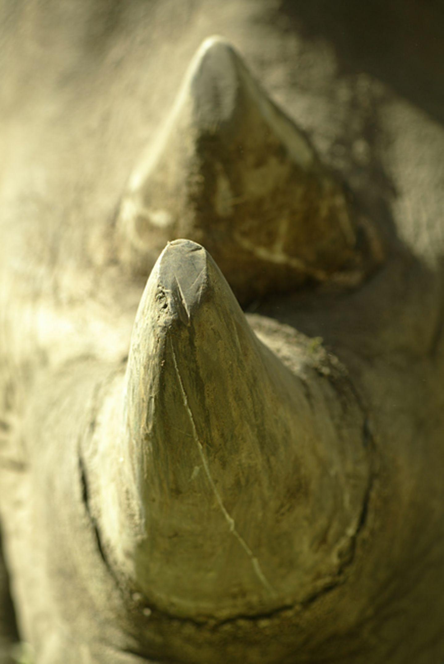 Fotostrecke: Rettet die Nashörner!