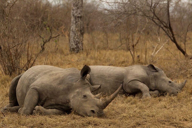 Fotostrecke: Rettet die Nashörner! - Bild 2