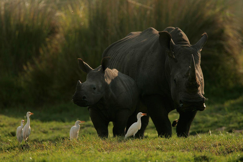Fotostrecke: Rettet die Nashörner! - Bild 3