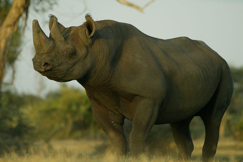 Fotostrecke: Rettet die Nashörner! - Bild 4