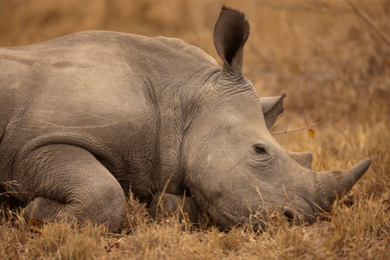 Fotostrecke: Rettet die Nashörner! - Bild 5
