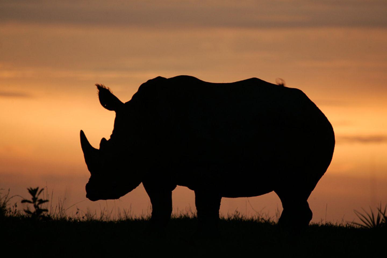 Fotostrecke: Rettet die Nashörner! - Bild 6