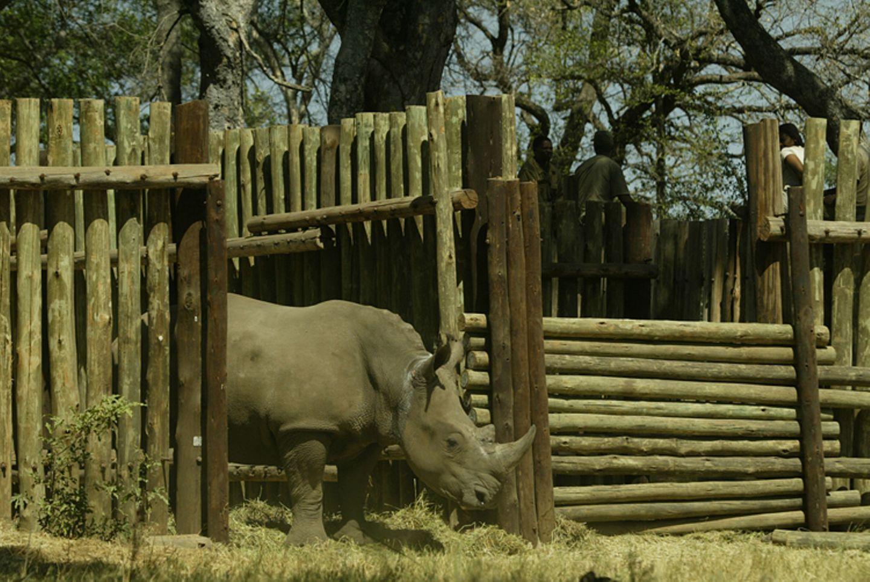 Fotostrecke: Rettet die Nashörner! - Bild 8