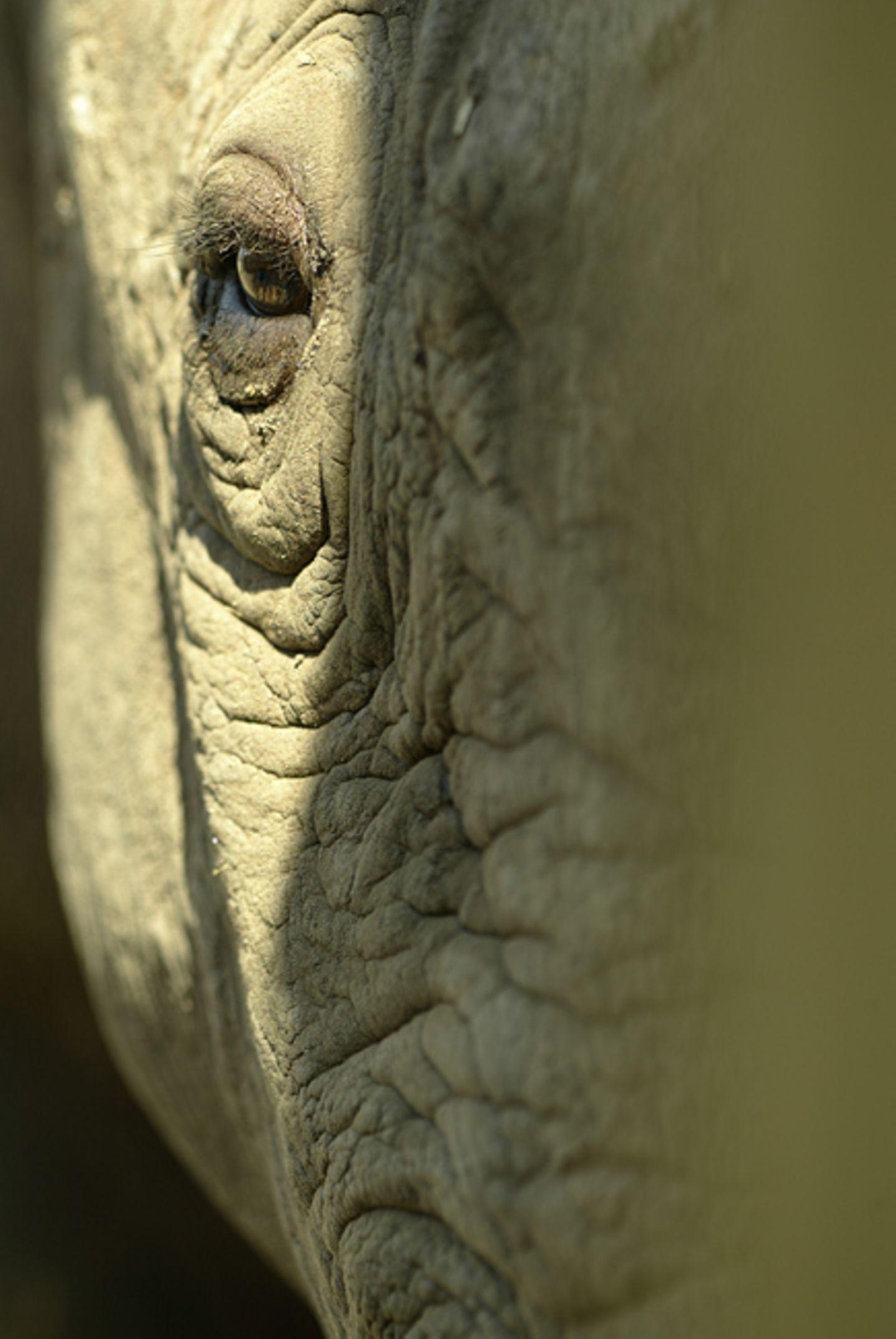 Fotostrecke: Rettet die Nashörner! - Bild 9