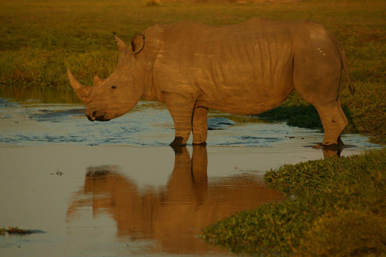 Fotostrecke: Rettet die Nashörner! - Bild 10