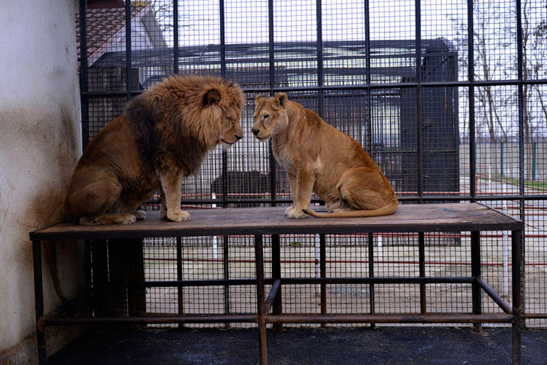 Interview: 20 Jahre für den Tierschutz - Bild 8