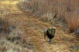Interview: 20 Jahre für den Tierschutz - Bild 9