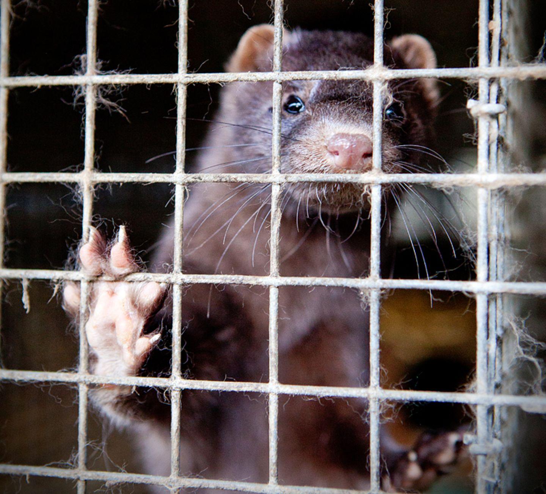 Interview: 20 Jahre für den Tierschutz - Bild 11