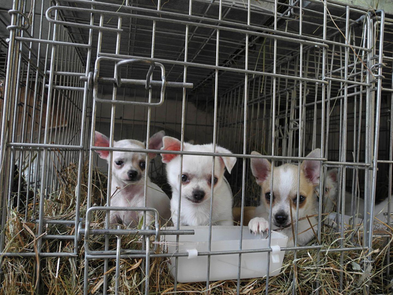 Interview: 20 Jahre für den Tierschutz - Bild 13