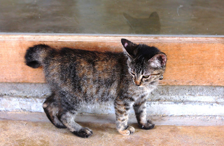 Tierschutz: Hilfe für Streunerkatzen in Thailand