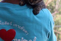 Tierschutz: Hilfe für Streunerkatzen in Thailand - Bild 2