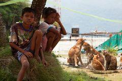 Tierschutz: Hilfe für Streunerkatzen in Thailand - Bild 3