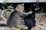 Tierschutz: Hilfe für Streunerkatzen in Thailand - Bild 4