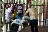 Tierschutz: Hilfe für Streunerkatzen in Thailand - Bild 10