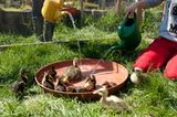 Fotogalerie: Ein Krankenhaus für Fuchs und Hase - Bild 9
