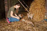 Fotogalerie: Ein Krankenhaus für Fuchs und Hase - Bild 10