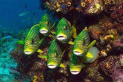 Exotische Unterwasserwelt