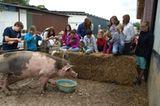 Tierschutz: Kinder für Schweine - Bild 6