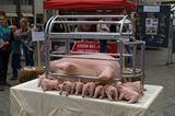 Tierschutz: Kinder für Schweine - Bild 10